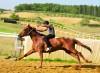 Palio-domani-4-giugno-ultimo-appuntamento-per-le-corse-di-addestramento-nella-pista-Il-Tamburo-di-Monticiano